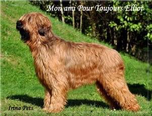 Щенки от Potap Charming Chelsea и Mon ami Pour Toujours Elliot  Sel